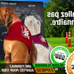 Comment Education canine oyonnax ou dresser son chien berger malinois | Informations