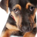 Comment Education canine formation : dressage chien nord Conseils