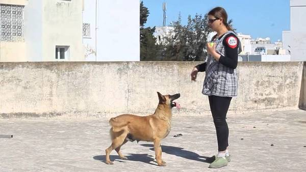 education canine chiot 6 mois