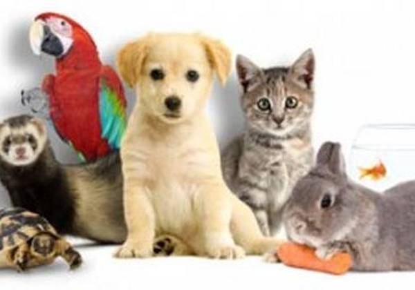 Mutuelle Animaux France